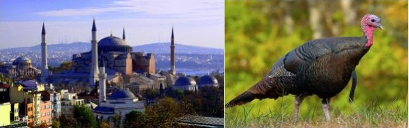 A photo of Istanbul in Turkey, and a turkey